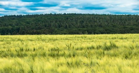 Inicjatywa Komisji Europejskiej – długoterminowa wizja obszarów wiejskich